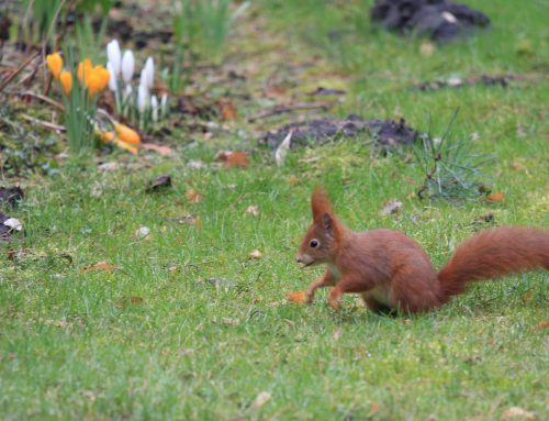 Eichhörnchen Familie in unserem Garten
