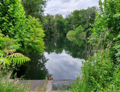 Der Wald … Stukenbrocker Zeitreise