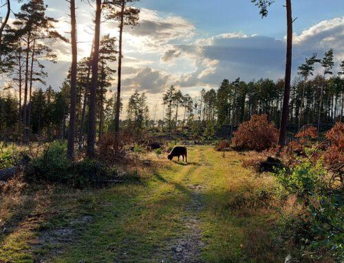 Geschichten aus dem Teutoburger Wald