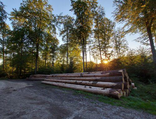 Neuigkeiten aus dem Teutoburger Wald