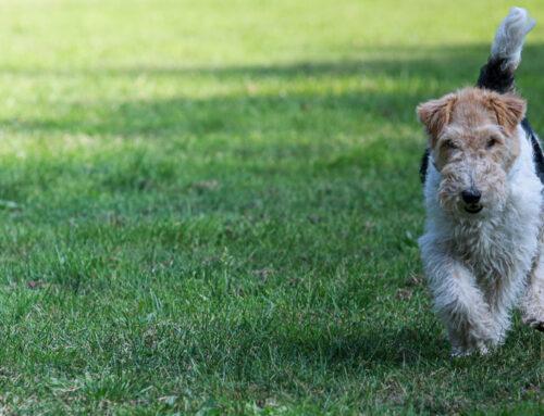 Hundebesitzerin gesucht