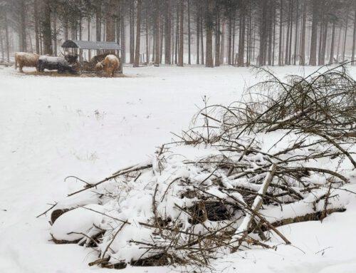 Schnee in der Wistinghauser Senne